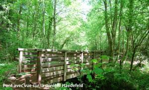 20160925_nordic-walkingwanderungimnatura2000gebiet - Copie